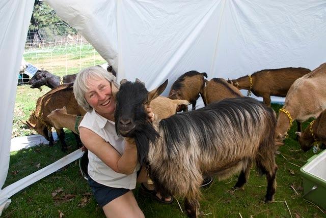 goat shelter moveable